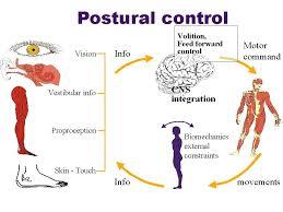 sistemas del control postural